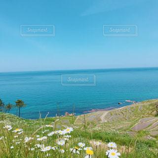 花揺れる向こうには海の写真・画像素材[2347240]