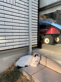 猫,動物,屋外,ペット,人物,ネコ
