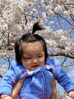 木の中に座っている小さな女の子の写真・画像素材[3077559]