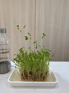 テーブルの上に花の花瓶の写真・画像素材[3143371]