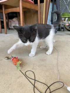 地面に横たわっている猫の写真・画像素材[3203298]