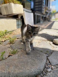 歩道を歩いている猫の写真・画像素材[3203299]