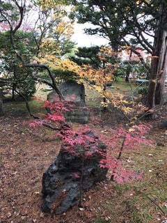 秋のお庭の写真・画像素材[2654929]