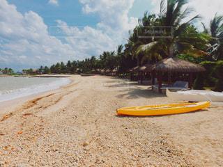 浜辺のヤシの木の群しの写真・画像素材[2352343]