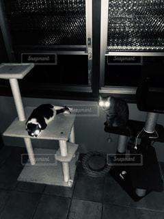 ニャンビームの写真・画像素材[2506569]