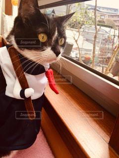 スケ番ニャンちゃんのニャルソックの写真・画像素材[2700951]