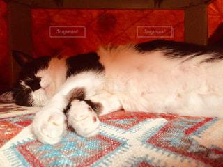 猫はコタツで丸くならないの写真・画像素材[2910271]