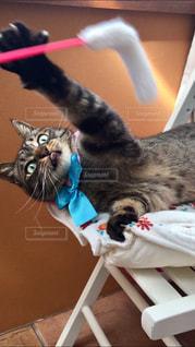 猫,動物,かわいい,ペット,人物,遊び,舌,キジトラ,ネコ,保護猫,ちい子