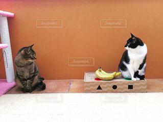 猫,動物,室内,ペット,人物,サンルーム,キジトラ,ネコ,ニャン,ちい子,マスク猫,フォトジェニック風