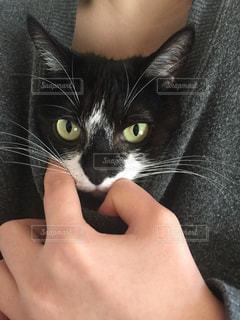 猫,動物,手,ペット,人物,顔,ネコ,ニャン,服の中,捕まった,マスク猫