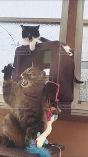 2人,猫,動物,女の子,ペット,人物,キジトラ,元野良猫,ネコ,ニャン,ヤンチャ,保護猫,ちい子,マスク猫