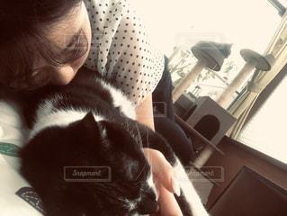 猫になりたいの写真・画像素材[3403625]