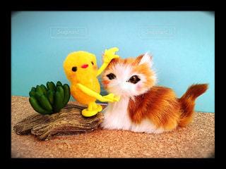 2人,猫,動物,屋外,黄色,仲良し,ペット,ぬいぐるみ,人物,人形,ハンドメイド,愛,生命,仲間,ネコ,なでなで,なでる,愛着,飼う,敵,弱人強食