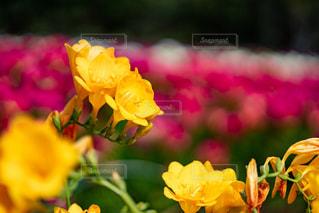 花のクローズアップの写真・画像素材[2355574]
