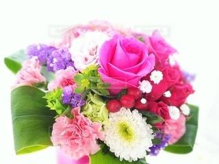花のクローズアップの写真・画像素材[2360940]