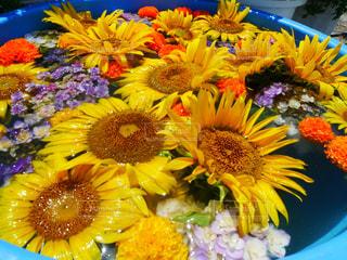 黄色い花のクローズアップの写真・画像素材[2356687]