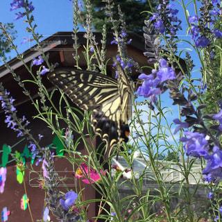 花園のクローズアップの写真・画像素材[2359641]