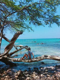 ハワイ島の海と流木の写真・画像素材[2359886]