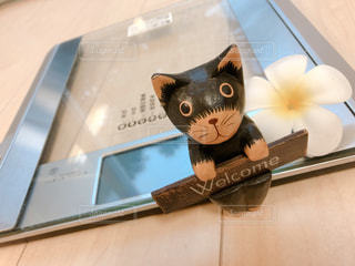 テーブルの上に座っている猫の写真・画像素材[2360698]