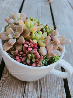 ティーカップの多肉植物の写真・画像素材[2729738]
