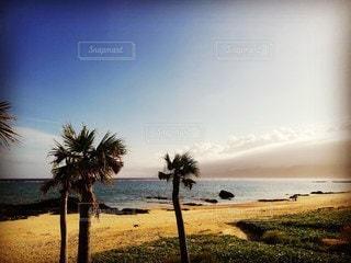 水域の近くのビーチでヤシの木の群れの写真・画像素材[2360664]