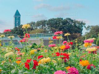 カラフルな花園の写真・画像素材[2388506]