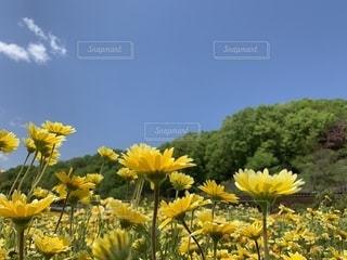 幸せの黄色い花の写真・画像素材[2423736]
