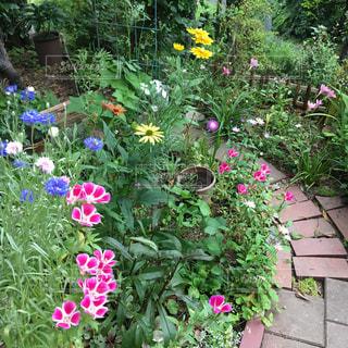 カラフルな庭の花たちの写真・画像素材[2368271]