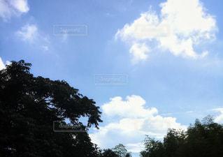 木の間から湧き出る雲の写真・画像素材[2411456]
