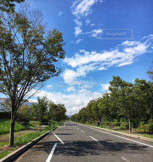 道路から見た雲と木の影の写真・画像素材[2417023]