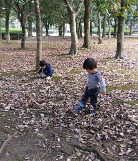 公園で遊ぶデニム姿の男の子たちの写真・画像素材[2430123]