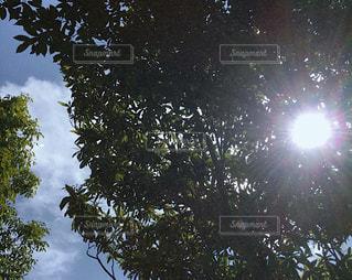 屋外,太陽,雲,景色,木漏れ日,樹木,ナチュラル,フィルム,雰囲気,自然光,フィルム写真,ひかり,フィルムフォト
