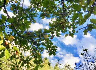 木のクローズアップの写真・画像素材[2460951]