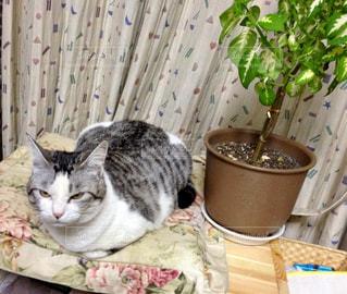 猫とグリーンの写真・画像素材[2476516]