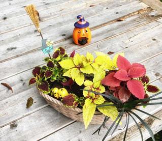 木製のテーブルの上の黄色い花の写真・画像素材[2509572]