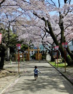 歩道を走る男の子の写真・画像素材[2514101]