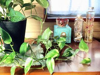 テーブルの上の花瓶の植物の写真・画像素材[2724444]