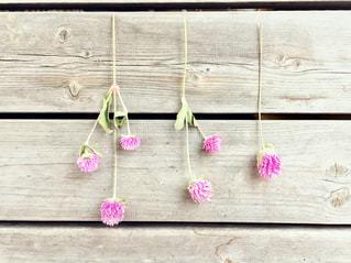 木の板にピンクの花の写真・画像素材[2733789]