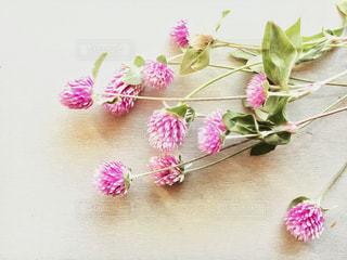 テーブルの上のピンクの花の写真・画像素材[2733803]
