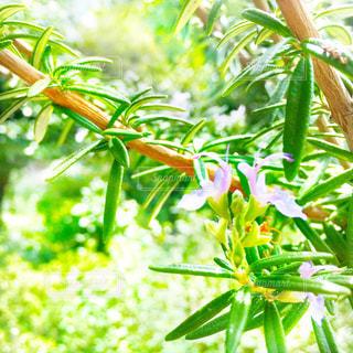 緑の葉を持つ紫の花の写真・画像素材[2788385]