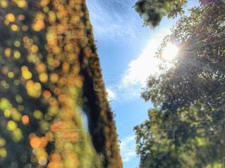 空,秋,紅葉,屋外,太陽,木漏れ日,光,樹木,玉ボケ,草木,黄葉,ツタ,外壁