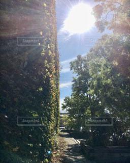 蔦の絡まる外壁から覗く太陽の写真・画像素材[2857861]