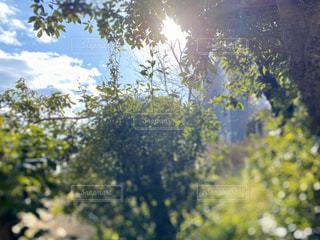 自然,空,冬,屋外,太陽,青空,木漏れ日,光,樹木,草木,新芽