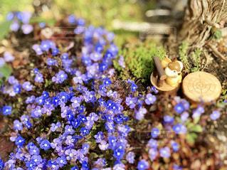 花園のクローズアップの写真・画像素材[3048164]
