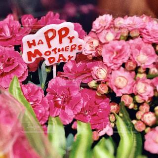 ピンクの花束のクローズアップの写真・画像素材[3192354]