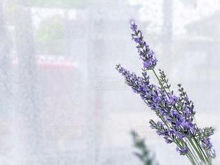 紫色の花で満たされた花瓶の写真・画像素材[3348191]