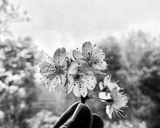 花のクローズアップの写真・画像素材[3672608]