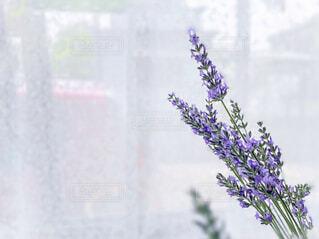 ラベンダーの花束の写真・画像素材[4606940]