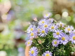 紫の小花のクローズアップの写真・画像素材[4873908]