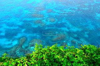 サンゴの水中眺めの写真・画像素材[2367700]